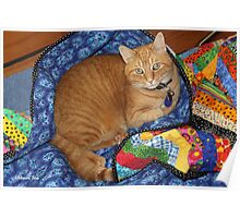 Dropped Quilt ~ Cat Opportunity! Poster