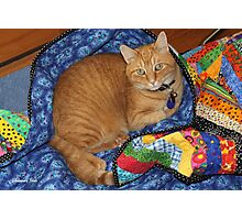 Dropped Quilt ~ Cat Opportunity! Photographic Print