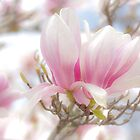 Magnificent Magnolia by Noeline R