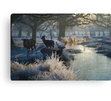 Christmas  Stag 9 Canvas Print