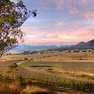 Denman Winery - Near Muswellbrook, NSW by Mark Richards
