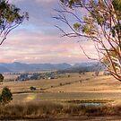 Wineries in Denman II - Near Muswellbrook, NSW by Mark Richards