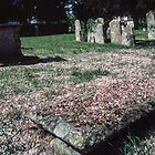 Flower bedecked graves and churchyard Fladbury England 198405140012 by Fred Mitchell