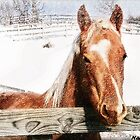 Horse in Snow by Nadya Johnson