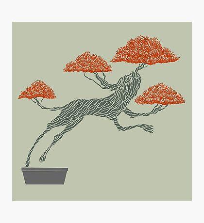 Bonsai Lion Escapes Photographic Print
