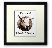 Baby Don't Herd Me Sheep Framed Print