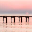 Foggy Sunrise by lisapowell