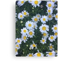 are we out of the flower patch Canvas Print