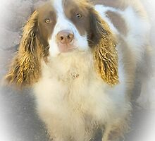 Spaniels are special by missmoneypenny