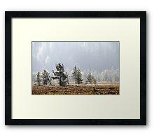 18.9.2014: Pine Trees, Autumn Morning Framed Print