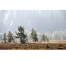 18.9.2014: Pine Trees, Autumn Morning Photographic Print