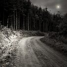 MOON FOREST by leonie7