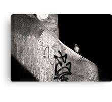 urban dweller Canvas Print
