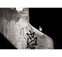 urban dweller Photographic Print