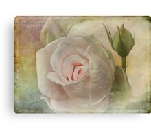 Tribute to a Rose Canvas Print