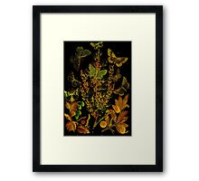 Japanned Butterflies Framed Print