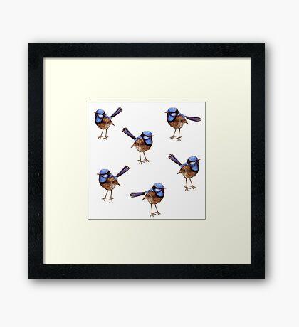 Blue Wrens, Russet and White Framed Print