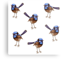 Blue Wrens, Russet and White Metal Print