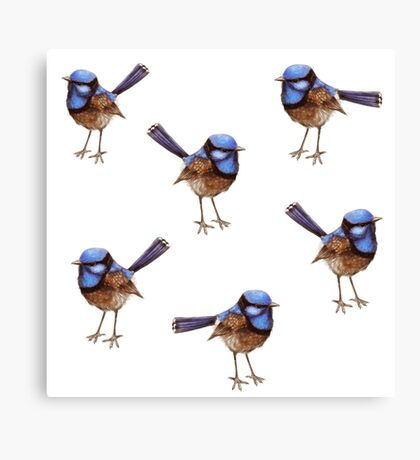 Blue Wrens, Russet and White Canvas Print