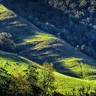 Green Tamborine by Mike Arnott
