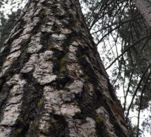 Tall trees Sticker