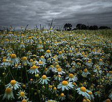 The Beauty of Wild ~ Oregon Wildflowers ~ by Charles & Patricia   Harkins ~ Picture Oregon