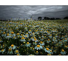 The Beauty of Wild ~ Oregon Wildflowers ~ Photographic Print