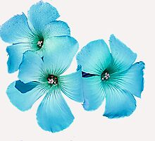 TURQUOISE FLOWER POWER  by elenimac