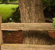 Rail Fence by Joy  Rector
