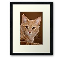 The ruler of our home Framed Print