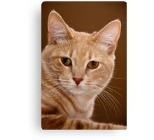 The ruler of our home Canvas Print