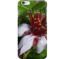 Acca sellowiana (Feijoa) iPhone Case/Skin