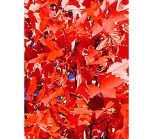 Fall Leaves in Red this is a lovely item for the cell phone pick any of my products please pass it on  Photographic Print