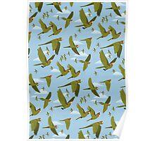 Parakeet Migration Poster
