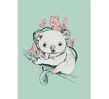 Koala! Photographic Print