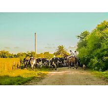 Horse Ranchers with their Cattle Photographic Print