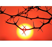Red Thorn - Simply Majestic Nature  Photographic Print