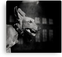 Dogs with game face on .27 Canvas Print