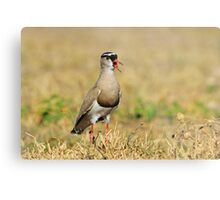 Plover Talk - Funny Nature and Entertaining Wildlife Metal Print