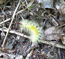 hop dog moth by brucemlong