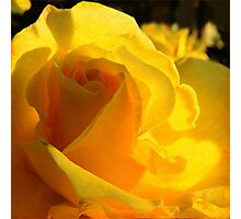 A Rose for My Mother  Photographic Print