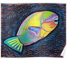 Parrotfish  Poster