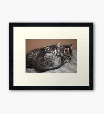 sleeping little kittens Framed Print