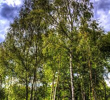 The Ancient Forest by DavidHornchurch