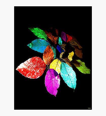 Beech Leaves Photographic Print