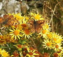Meadow Browns by sarnia2