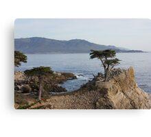 Monterey, California- wind blown tree Canvas Print