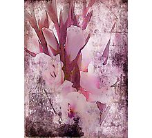 Gladiolas Blended Photographic Print