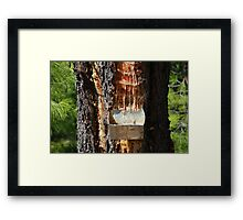 Pine resin collecting, Alonissos Framed Print