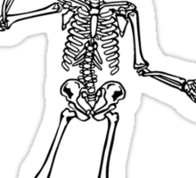 Skeleton Bones in the Average Human Body Sticker